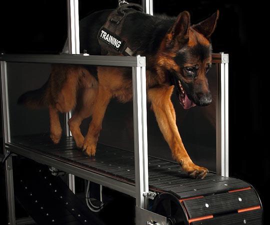 hondenloopband van HF-Mills.nl